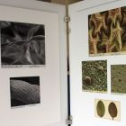 Biomimetika - inšpirácia prírodou